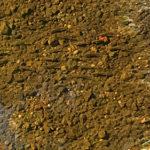 境川の小魚
